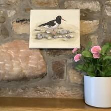 Distinctive Oystercatcher Canvas Print