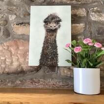 Eddy the Emu Canvas Print