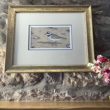 Shoreline Ringed Plover Original Painting