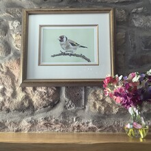 Gorgeous Goldfinch Original Painting