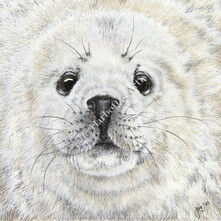 Neil the Baby Grey Seal Original Painting