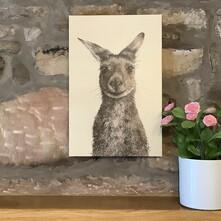Kenny the Kangaroo Canvas Print